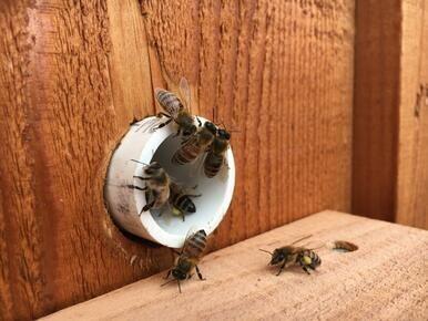 Mini Bee Pac - Shipped Monday - Wednesday