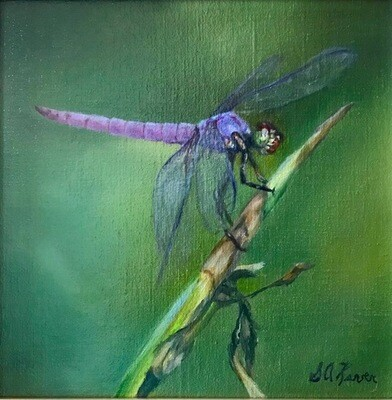 'Fantasy' 8x8 Oil on Canvas by Sonja A Kever