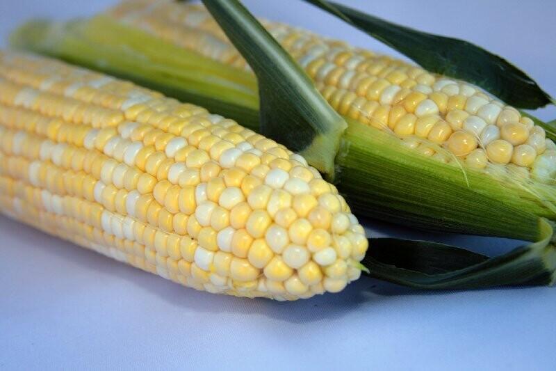 Fresh Ontario Corn on the Cob