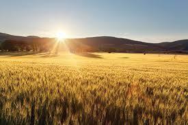 Grain Production - Online course