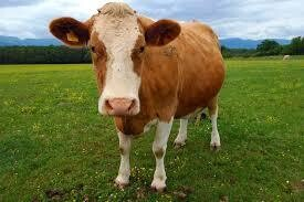 Beef Production - Online course