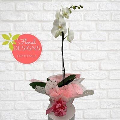 Orquídea en maceta