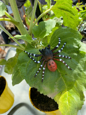 Ladybird Spider Collectible Figure