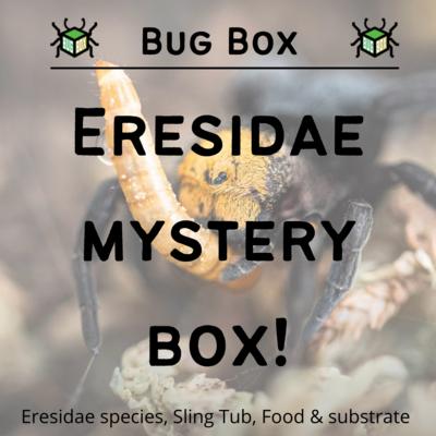 Eresidae Mystery Starter Box