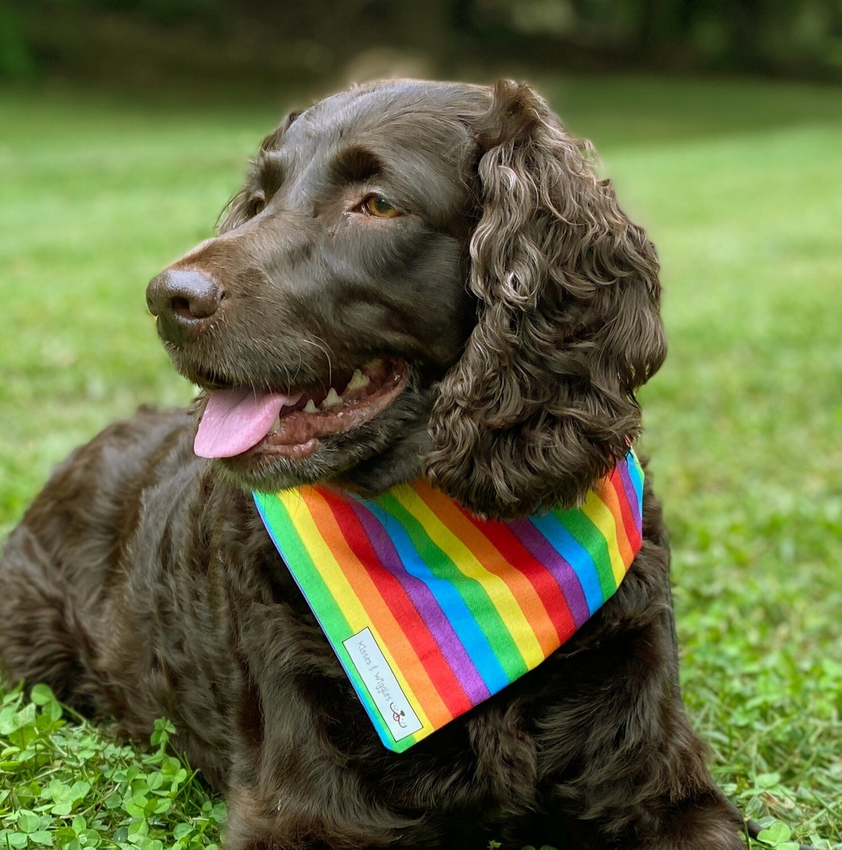 Rainbow Pride with Purple on Reverse
