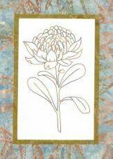 44730 Floral Emblem Stitchery Waratah $20