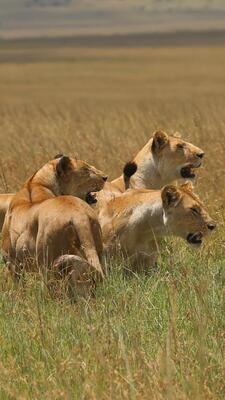 Tsavo East Full day Safari (non-resident price)
