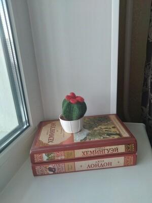 Кактус с красным цветком
