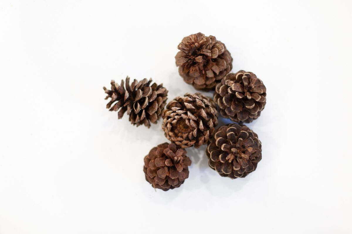 Pine Cones with Light Sparkle