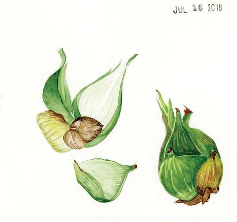 53 Mondays Collector's Edition #14 (Jul 16)