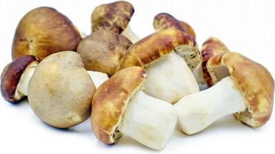Dried Wine Cap Mushroom
