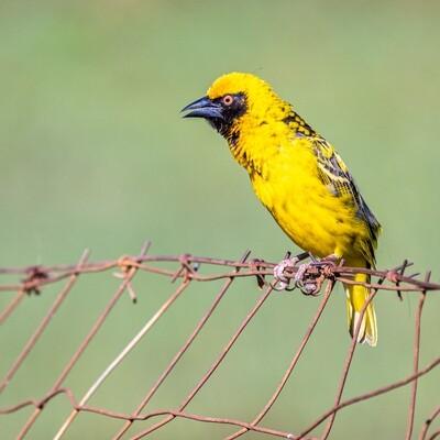 Begin Birding with Aldo Online Course