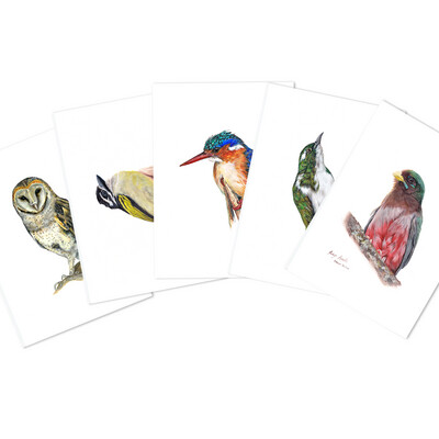 Pack of A6 Greeting Cards (South African Birds 1)