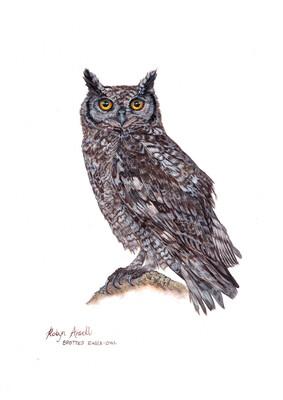 A4 Fine Art Print – Spotted Eagle-Owl