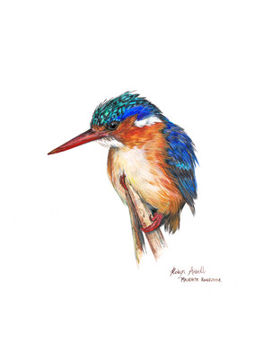 A4 Fine Art Print – Malachite Kingfisher