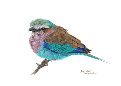 A4 Fine Art Print – Lilac-breasted Roller