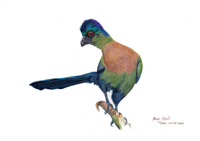 A4 Fine Art Print – Purple-Crested Turaco