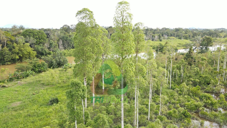 Wild Grown Tree