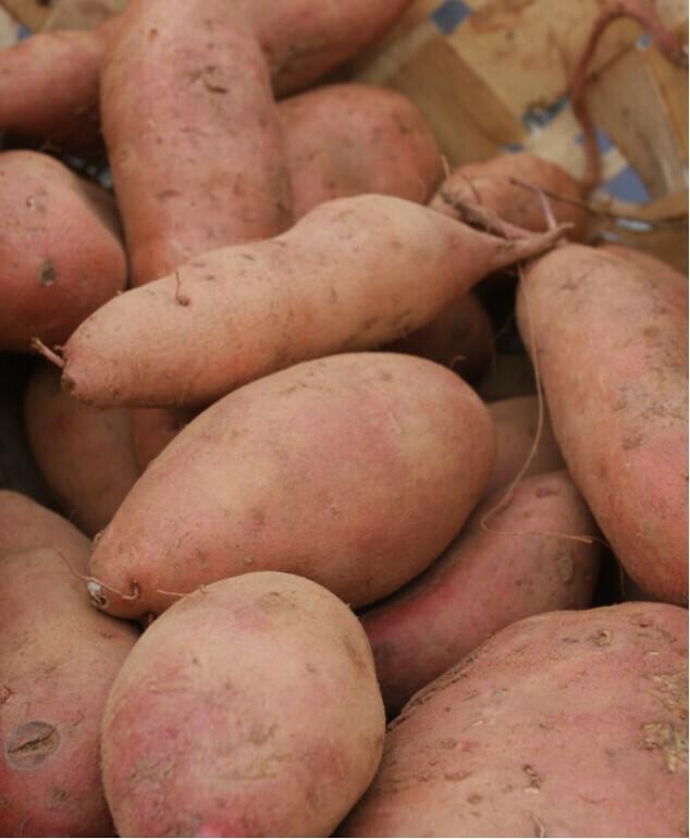 Orange Sweet Potatoes 10 pounds