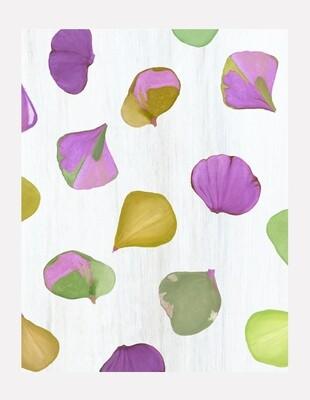 Art Print:  Purple Hydrangea Petals on Snow