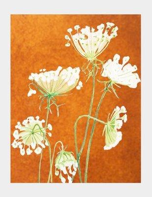 Art Print:  Queen Anne's Lace on Rusty Orange