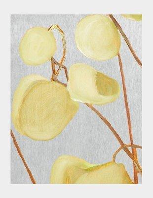 Art Print:  Milkweed on Pale Grey