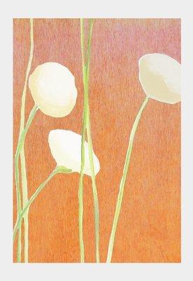Art Print:  Cream Flowers on Orange