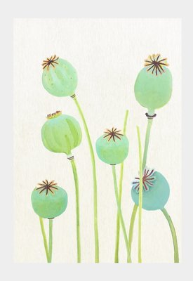 Art Print:  Poppy Pods on Ecru