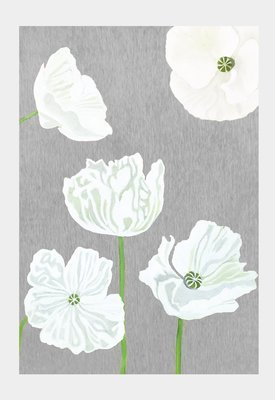 Art Print:  White Poppies on Grey
