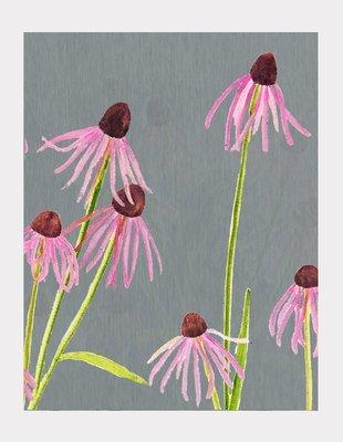 Art Print:  Pink Echinacea on Grey