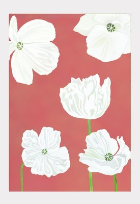 Art Print:  White Poppies on Pink
