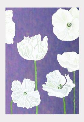 Art Print:  White Poppies on Violet