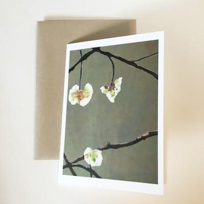 White Flowers on Dark Green Notecard