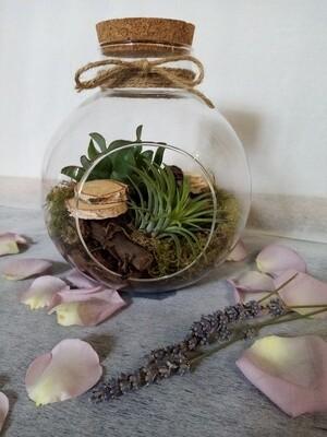 Composition succulente