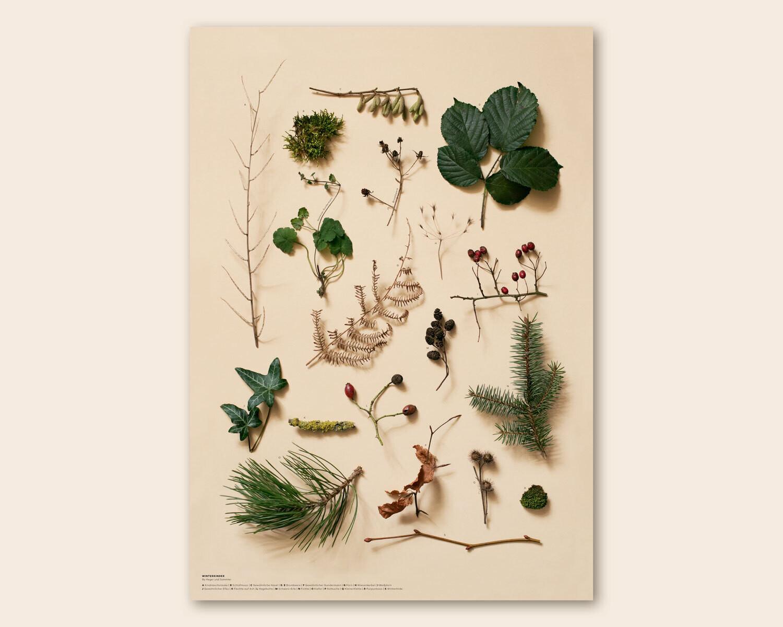 Wildpflanzen im Winter   Poster DIN A2