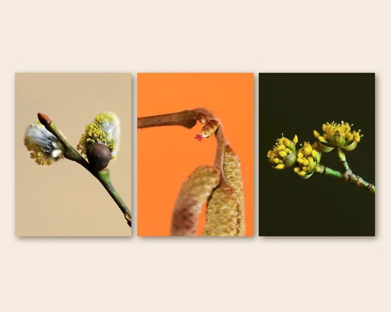 Frühlingsblüten   3er Postkarten-Set
