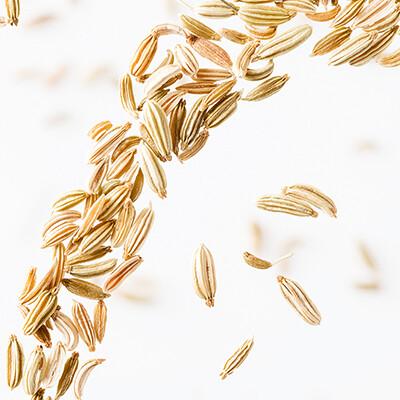 Graines de fenouil d'Egypte