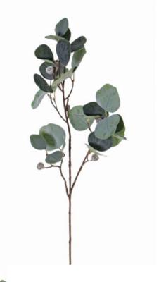 Eukalyptus Zweig «konserviert»