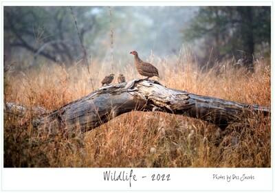 A3 Wildlife Calendar - 2022