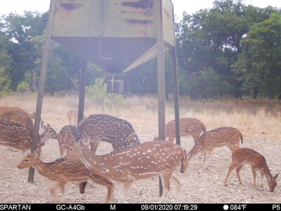 2 day 2 night Hunting Adventure in the Texas Hill Country. Kids Under 15 Hunt Free!