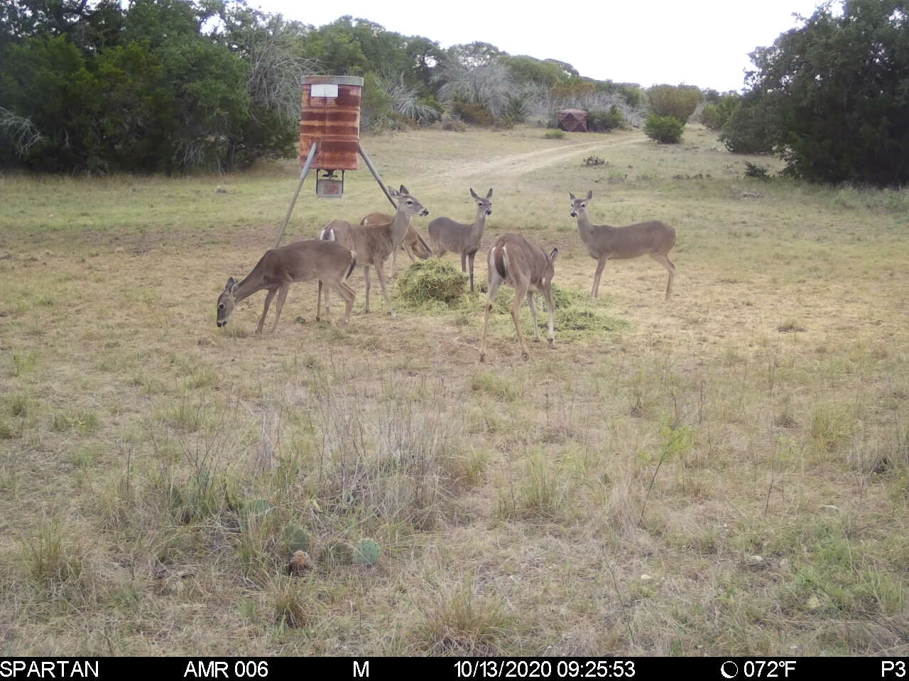 2000 acre Hunting Lease NW of Junction Texas. $ 36k For 12 Hunters