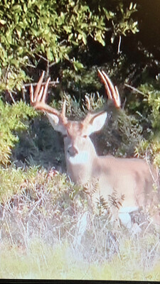 676 Acre Menard County Hunting Lease $3500 Per Membership. 4 Total With Campsite. Available February 2022