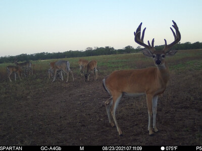 6600 Acre Corporate Turn Key Hunting Lease near Junction Available February 2022
