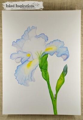 Pale Blue Iris - Watercolor