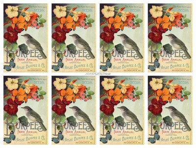 Burpees Seed Packet with Bird - PDF