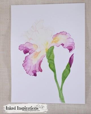 Two-Tone Iris - Watercolor