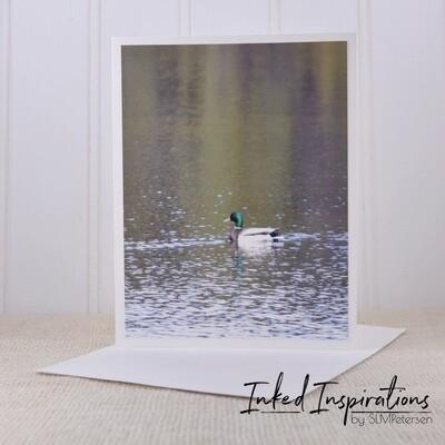 Mallard Duck- Original Photography