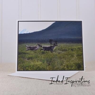 Caribou Pair - Original Photography