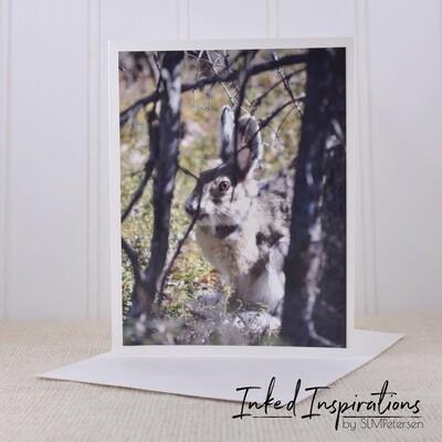Arctic Hare - Original Photography