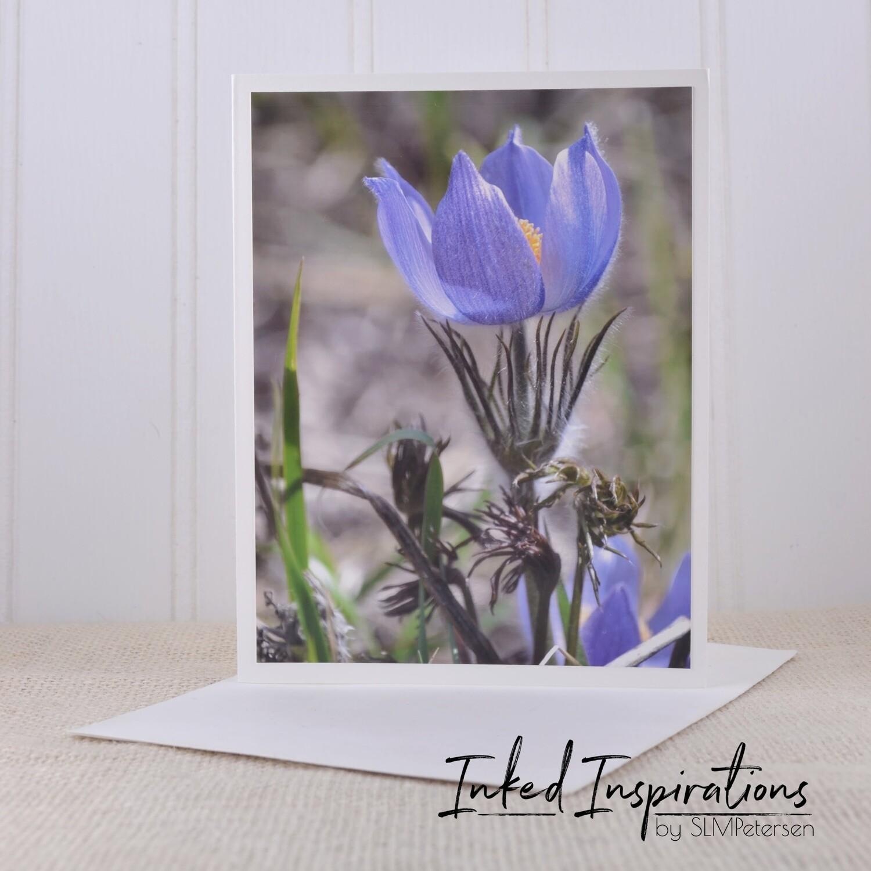 Pasque Flower (3) - Original Photography